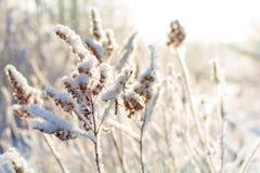 De winteraard op een Zonnige dag Stock Afbeeldingen