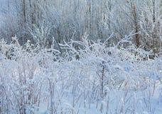 De winteraard op een Zonnige dag Royalty-vrije Stock Afbeeldingen
