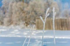 De winteraard op een Zonnige dag Royalty-vrije Stock Fotografie