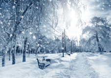 De winteraard, sneeuwstorm Stock Foto