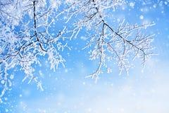 De winterachtergrond Stock Fotografie