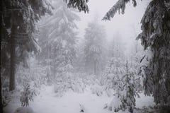 De winterachtergrond, bos in sneeuw en ijs Royalty-vrije Stock Foto's
