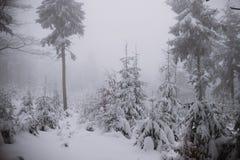 De winterachtergrond, bos in sneeuw en ijs Royalty-vrije Stock Foto