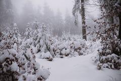 De winterachtergrond, bos in sneeuw en ijs Stock Afbeeldingen