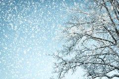 De winterachtergrond die omhoog in een boom in een sneeuwweer kijken royalty-vrije stock afbeelding