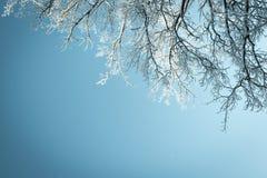 De winterachtergrond die omhoog in een boom kijken stock fotografie