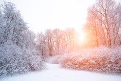 De winterachtergrond, landschap De winterbomen in sprookjesland De winter Royalty-vrije Stock Fotografie