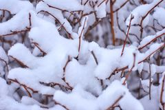 De winterachtergrond met een ijzige struik stock afbeelding