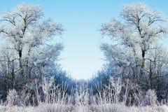 De winterachtergrond met ijzige takken in de voorgrond Stock Foto's