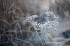 De winterachtergrond met neutrale kleuren van een bevroren installatie Stock Fotografie