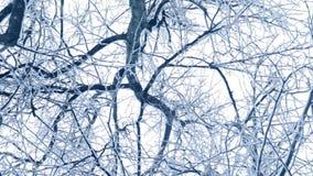 De winterachtergrond met sneeuw fallind juiste boomtakken in camera en langzaam roterende stock footage