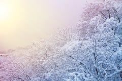 de winterachtergrond met sneeuwbomen Mooi die de winterlandschap met bomen met sneeuw in park, bos en zon worden behandeld stock fotografie