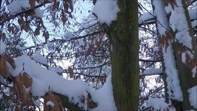 De winterachtergrond met snow-covered boomtakken stock footage