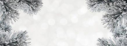 De winterachtergrond met snow-covered pijnboomtakken royalty-vrije stock foto