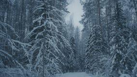 De winteravond in bos stock videobeelden
