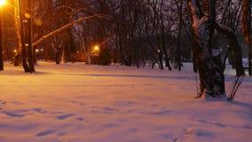 De winteravond in het stadspark stock fotografie