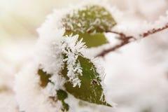 De winterbehang Stock Afbeeldingen