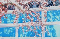 De winterbes en sneeuw in noordoostelijk sneeuwonweer 2014 Stock Fotografie