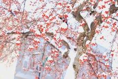 De winterbes en sneeuw in noordoostelijk sneeuwonweer 2014 Royalty-vrije Stock Fotografie