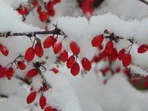 De winterbessen Stock Foto's