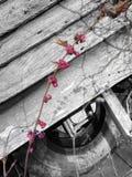 De winterbessen door een schuur Stock Afbeelding