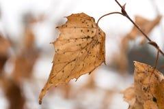 De winterblad Stock Fotografie