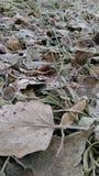De winterbladeren royalty-vrije stock afbeelding