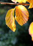 De winterbladeren Royalty-vrije Stock Foto
