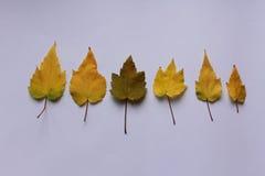 De winterbladeren Stock Afbeelding