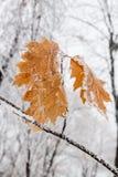 De winterbladeren met sneeuw en rijp worden behandeld die Royalty-vrije Stock Foto's