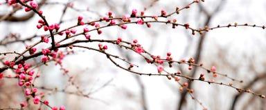 De winterbloemen Stock Afbeelding