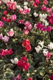 De winterbloemen Royalty-vrije Stock Afbeeldingen