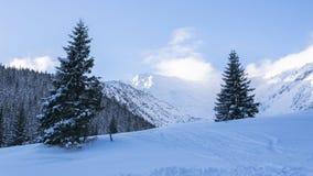 De winterbomen in bergvallei Stock Foto's