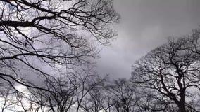 De winterbomen bij park in Osaka, Japan stock video