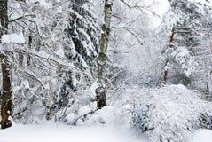 De winterbomen die met sneeuw in het bos worden behandeld. Royalty-vrije Stock Foto