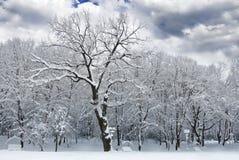 De winterbomen die met sneeuw in het bos worden behandeld. Royalty-vrije Stock Fotografie