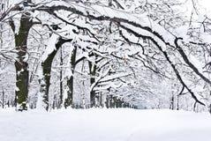 De winterbomen die met sneeuw in het bos worden behandeld. Stock Afbeelding