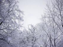De winterbomen in een eerste sneeuw op een heldere blauwe hemel Royalty-vrije Stock Fotografie