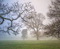 De winterbomen in een nevelige parkland royalty-vrije stock foto's
