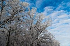 De winterbomen in hemel stock afbeeldingen