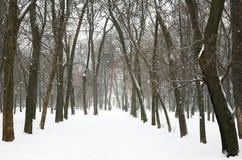 De winterbomen in het stadspark stock afbeelding