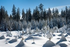 De winterbomen met Ijzige Sneeuw worden behandeld, Sunny Weather dat royalty-vrije stock afbeelding