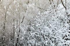 De winterbomen met ijzige witte takken in het park stock afbeeldingen
