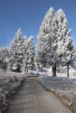 De winterbomen met vorst en blauwe hemel worden behandeld die Stock Afbeelding