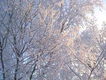 De winterbomen onder sneeuw op een blauwe hemelachtergrond Royalty-vrije Stock Afbeeldingen