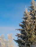 De winterbomen onder sneeuw in zonnige dag Stock Foto