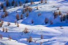 De winterbomen op bergenhellingen met sneeuw worden behandeld die Stock Afbeeldingen