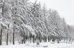 De winterbomen in witte pluizige sneeuw worden behandeld die stock afbeelding