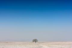 De winterboom Royalty-vrije Stock Afbeeldingen