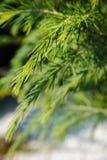 De winterboom closse omhoog Royalty-vrije Stock Foto's